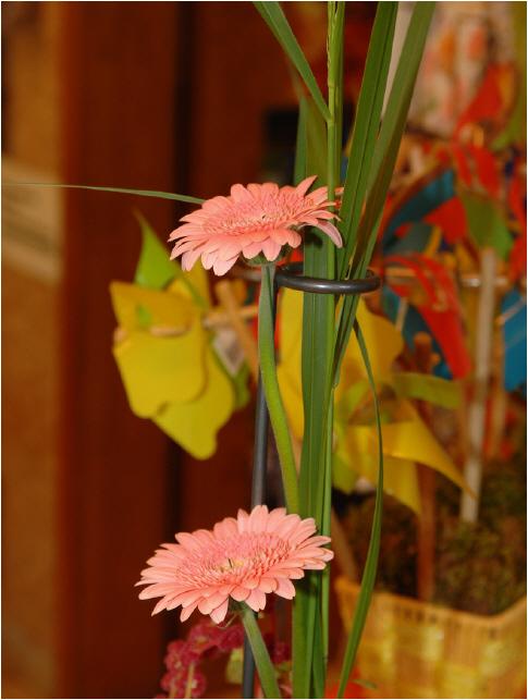 Dahlien aus dem eigenen garten pflanzen pergola rasen mähen